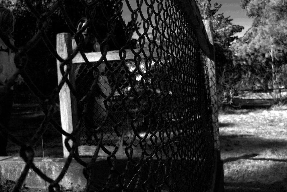 black fence  by Matthew  Smith