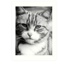 Mr Grumpy aka Oliver Art Print