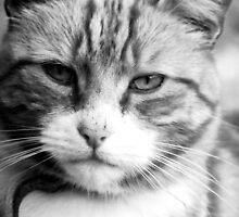 Mr Grumpy aka Oliver by lisachloe