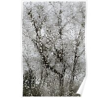 Trees through the Ice Poster