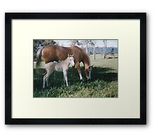 Colour's Fancy That & Steals The Thunder Framed Print