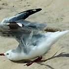 Ready for take off, Surfers Paradise, Qld Australia by Sandra  Sengstock-Miller