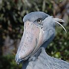 Big Grey Bird by ssphotographics