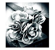 Leave Roses... Photographic Print