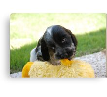 winnie and her duck Canvas Print