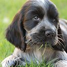 winnie helping with the lawn by ssphotographics