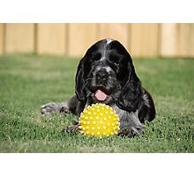 winnie and her ball Photographic Print