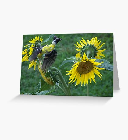 ( Birdseye view of a ) Goldfinch in Flying over the Sunflowers Greeting Card