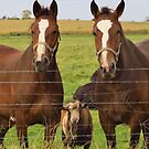 Two Horses and One Old Goat by lorilee