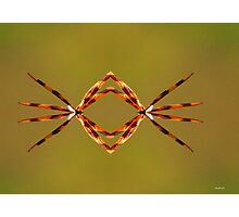 Wings of the Dragon Photographic Print