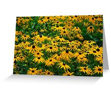 Black Eyed Daisies Greeting Card