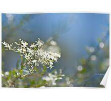 Evans Crown Wildflowers Poster