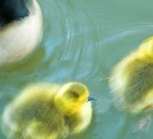 Geese & Gosling Sticker
