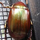 Cool Copper-Green Iridescent Beetle by nauticalelf