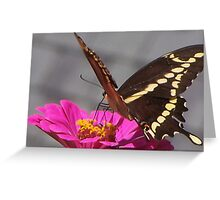 Same Monarch Butterfly  Greeting Card