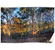 Morning Light - Hill End - The HDR Series Poster