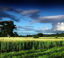 Hammerhead Fields by colin campbell