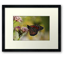 Butterfly and Blooms 4 Framed Print