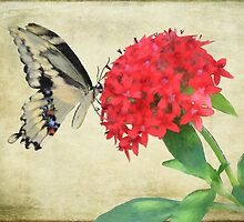Watercolor Butterfly by Rosalie Scanlon