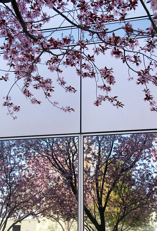 Spring Blossom Reflections and Architecture (1) by SteveOhlsen
