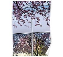 Spring Blossom Reflections and Architecture (1) Poster