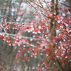 Shimmer by Debbra Obertanec