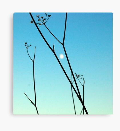 moony day Canvas Print