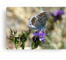 summer fly Canvas Print