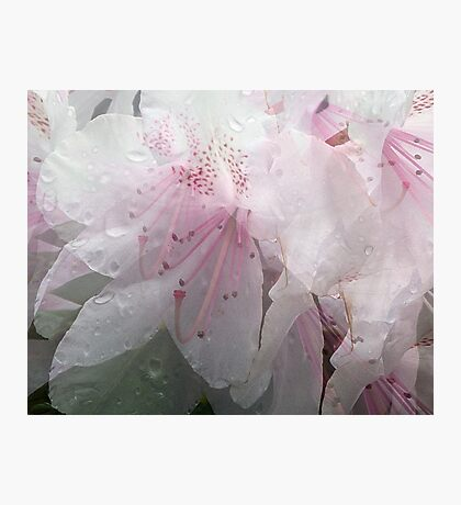 Sheer Delight Photographic Print