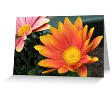 Bright and Beautiful - Bella Cape Daisies Greeting Card