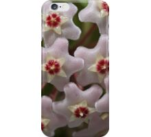 Hoya Waxflower iPhone Case/Skin