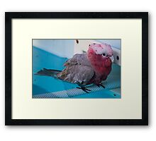 Yes, it is hot... Framed Print