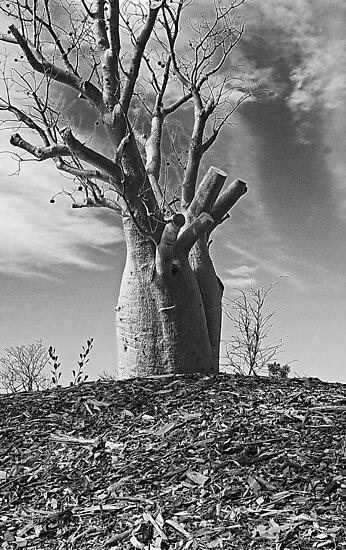 Boab Tree  by EOS20