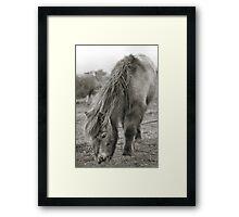 my little pony.. Framed Print
