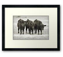 three amigos.. Framed Print