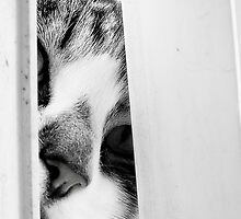 Peek-a-boo by lisachloe
