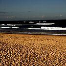 Nobbys Beach by Mathew Reed