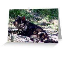photoj Tassie Devil Sunbaking Greeting Card