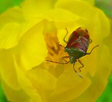 Stinkbug with a substance abuse problem by Chris Caples