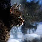 Tasha Reflecting by jodi payne