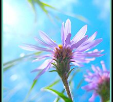 Purple flower by Chris Caples
