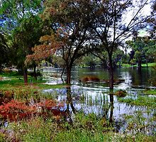 BASSENDEAN RIVER WALK  by HG. QualityPhotography