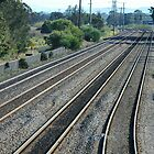 Railway Line at Hexham NSW by Phil Woodman