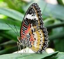 Colorful - Lacewing by Luann Gingras