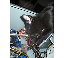 Lil Bear Helps Fix Computer Photographic Print