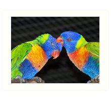 Rainbow Lorrikeets Art Print