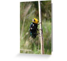 Yellow Head Fly Greeting Card