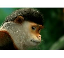 Doucs Langur Photographic Print