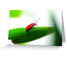 Lily Beatle - 2 Greeting Card