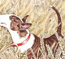 Bull Terrier in the corn field by threebrownhares
